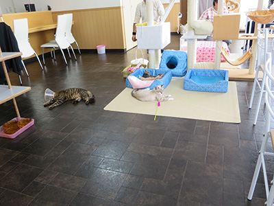 catcafe_02