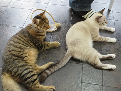catcafe_10