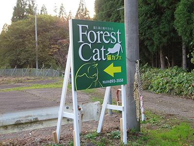 forestcat_19