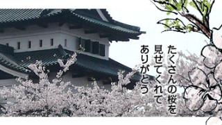 今年も弘前公園へ行ってきました。