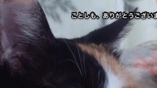 年の瀬に猫の自撮りアプリで遊んでみました。