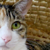 秋田市山王にある猫カフェで大きなニャンコたちと触れあう時間。
