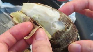 これはいい!手が痒くならない里芋の皮のむき方。
