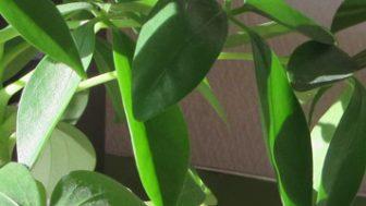 観葉植物の土にカビが生えて困る問題に立ち向かう話。