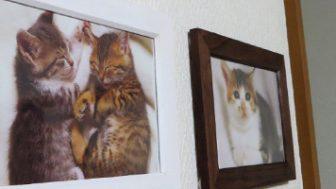 穴をあけずに写真や小物を壁や棚に固定できる粘着剤「ひっつき虫」はすごい。